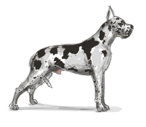 fbx_great dane 600x520